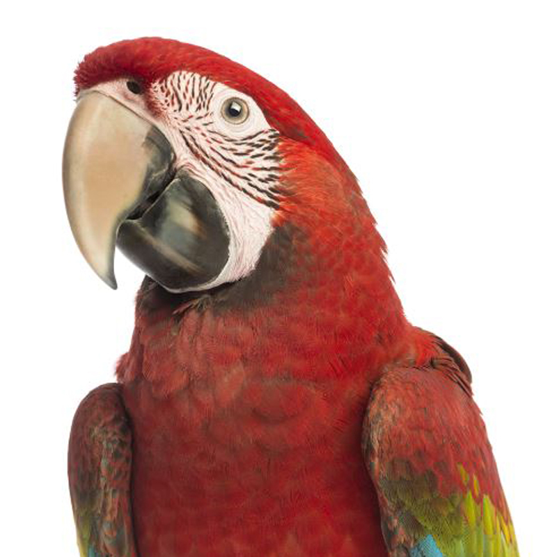 купить клетки для птиц