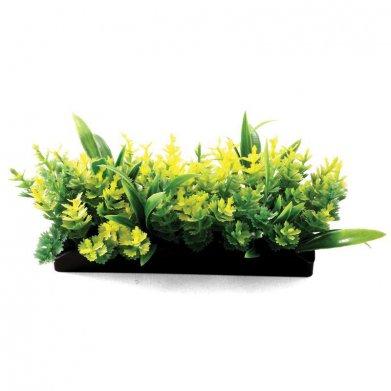 Фото Композиция Laguna из аквариумных растений
