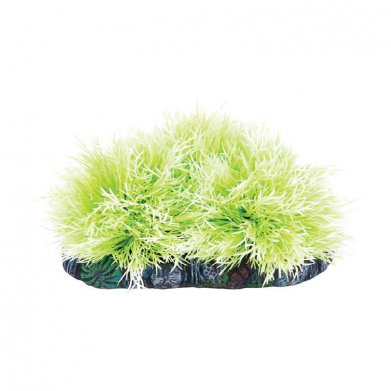 Фото Растение Laguna с распылителем