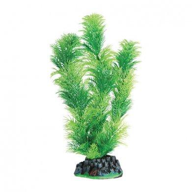 Фото Растение Laguna 3012A с распылителем