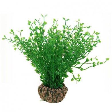 Фото Растение Laguna 1902AR с распылителем