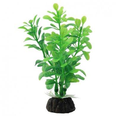Фото Растение Triol