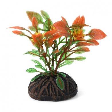 Фото Растение Triol 0877