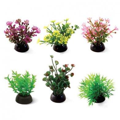 Фото Растения Laguna, наборы