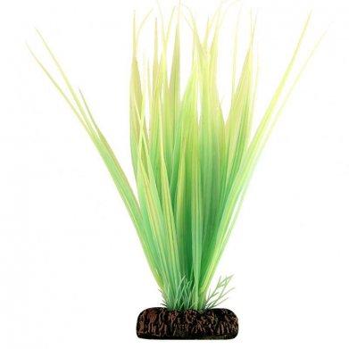 Фото Растение Laguna светящееся